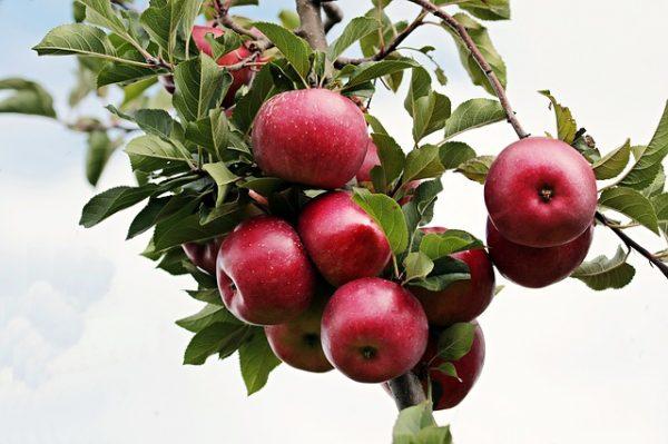 apple-2788599_640