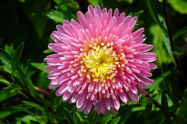 aster-3614992_640