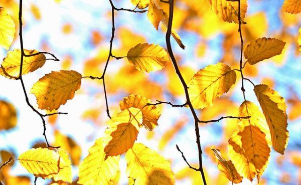 autumn-1042346_640