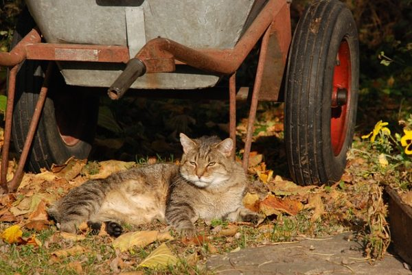 cat-1567675_640