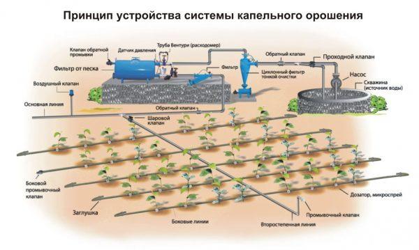 drip-irrigation2-1