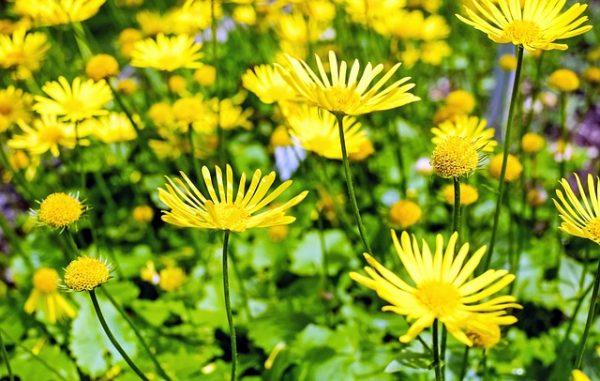 flower-1368049_640
