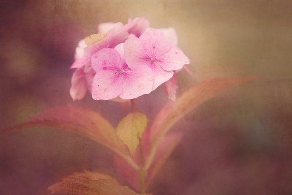 flower-1845660_640