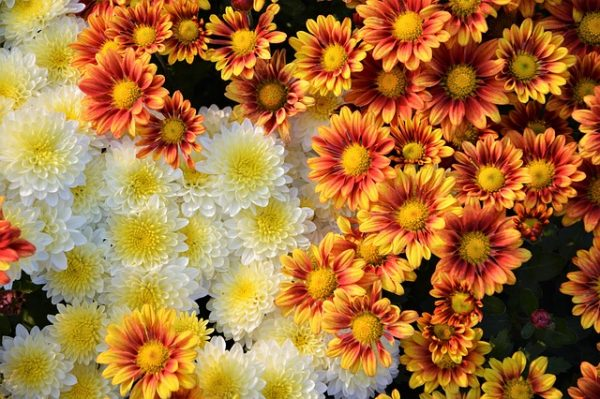 flower-3011941_640