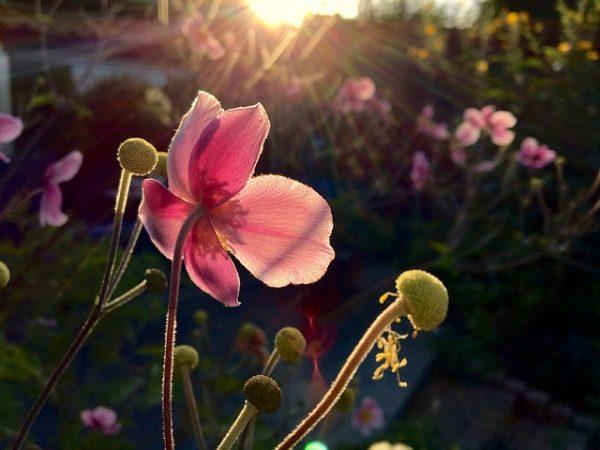 flower-3690409_640