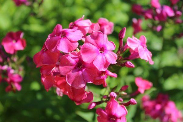flowers-3630195_640