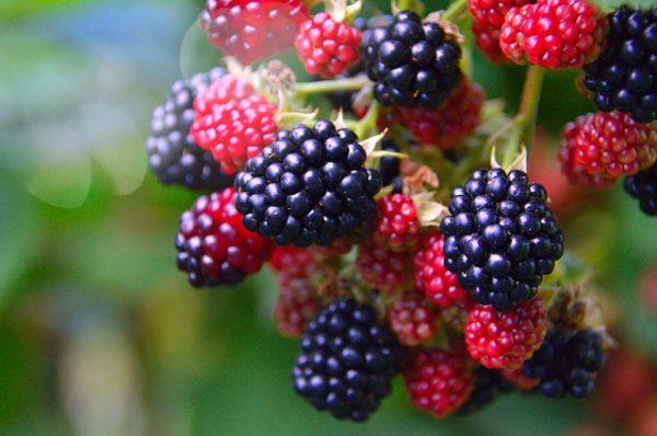 fruit-3062683_640