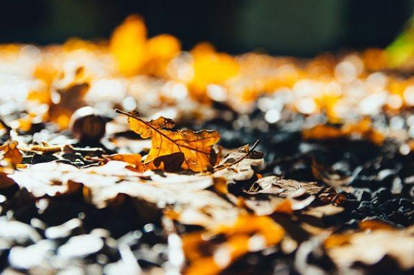 leaves-2812461_640