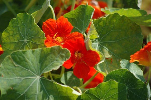 orange-flower-3492274_640