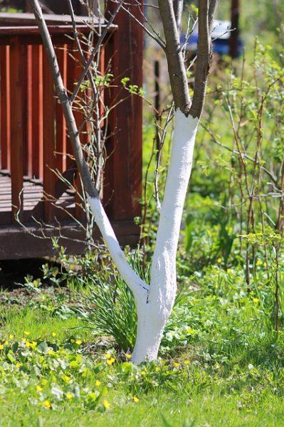 spring-2748613_640
