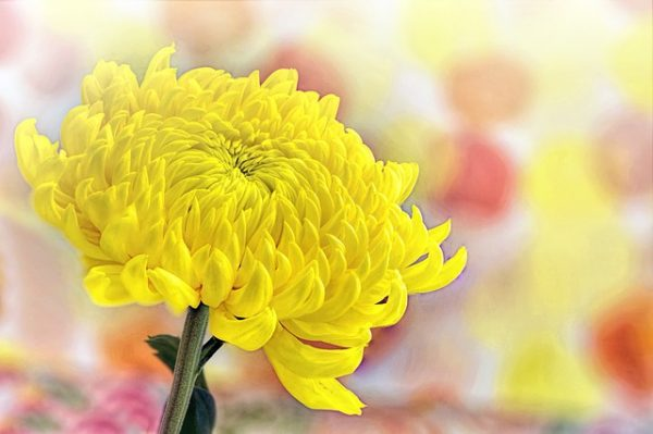 yellow-3190762_640