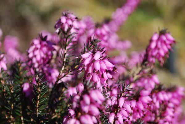 flowers-182093_640