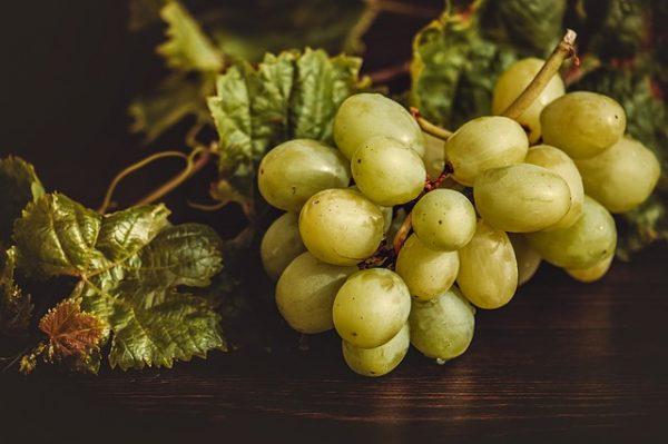grapes-3696472_640