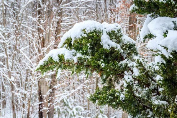 winter-652726_640