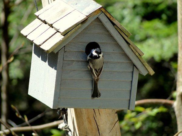 bird-house2-1