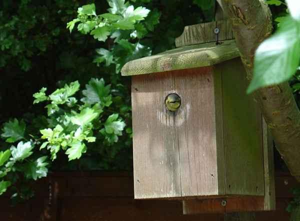 bird-house6