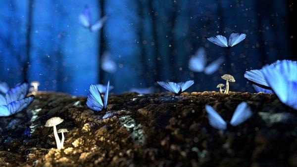 butterfly_son