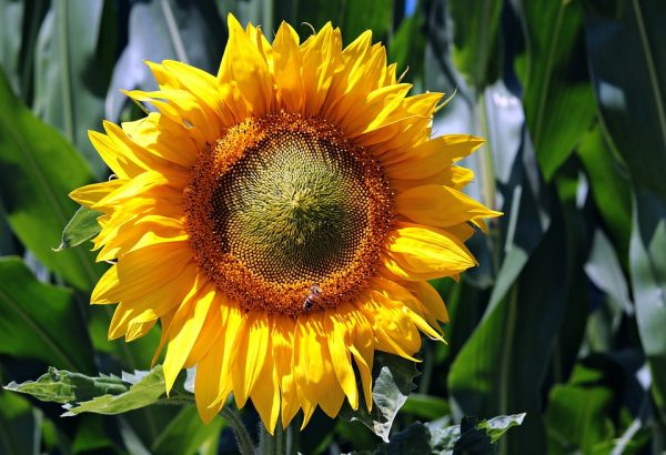 spring-flowers10
