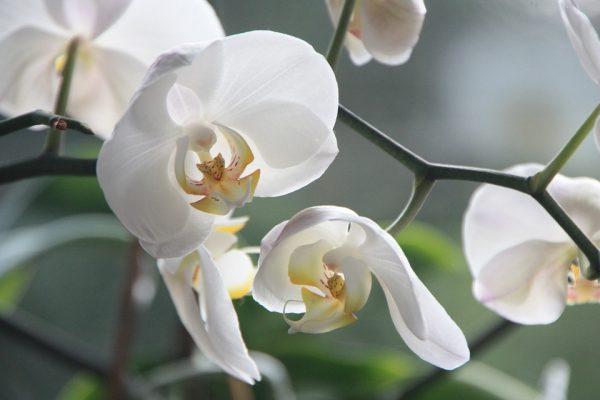 spring-flowers13