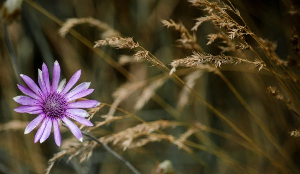 spring-flowers3