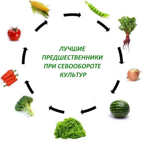vegetables5