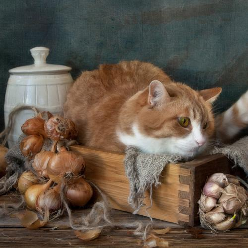 cat3-1