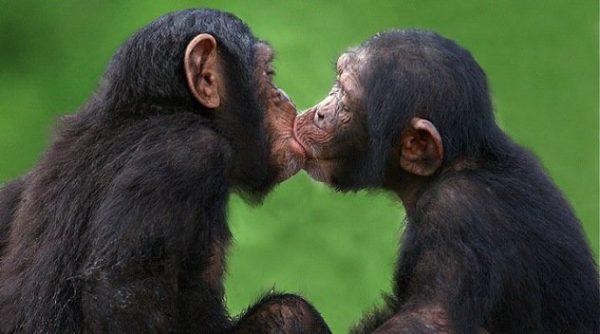kiss_you7