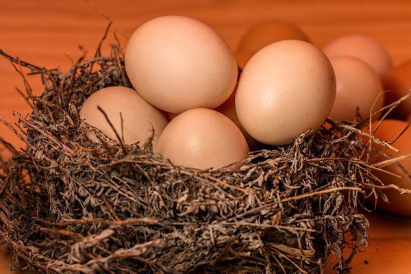 egg2-1