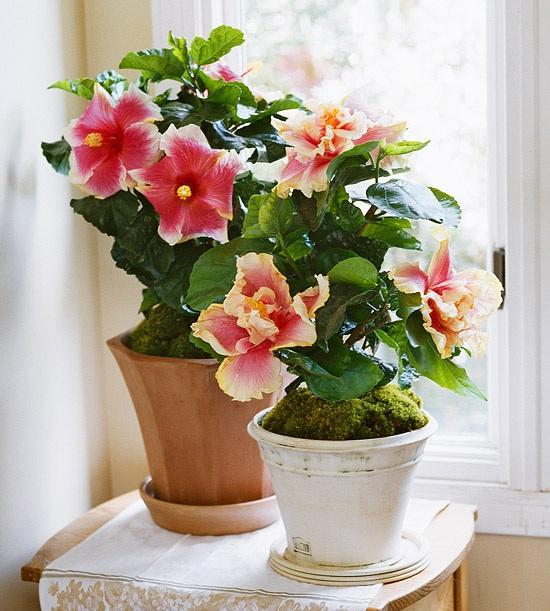 room_flowers