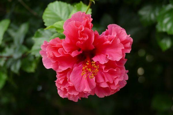 room_flowers10