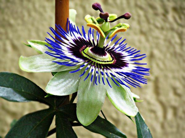 room_flowers4