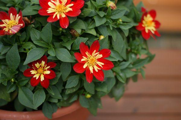 room_flowers6