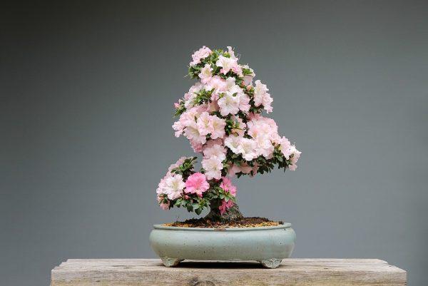 room_flowers9