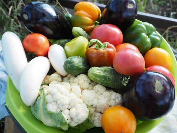 vegetarian3