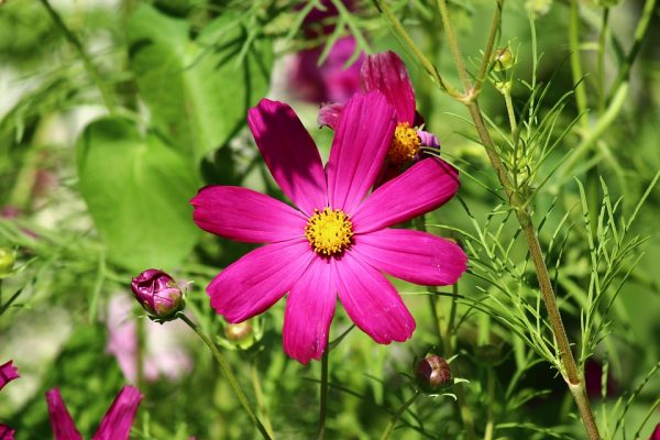 flower6