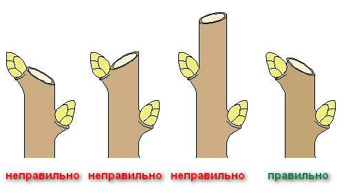 obrezka6