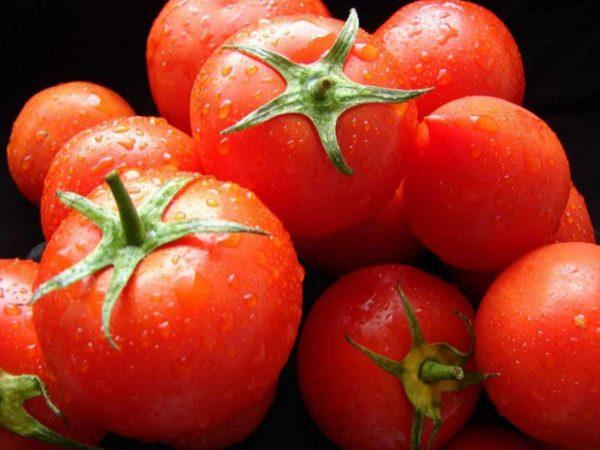 tomato7-1