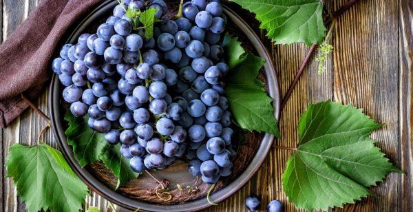 vinograd_grozdya