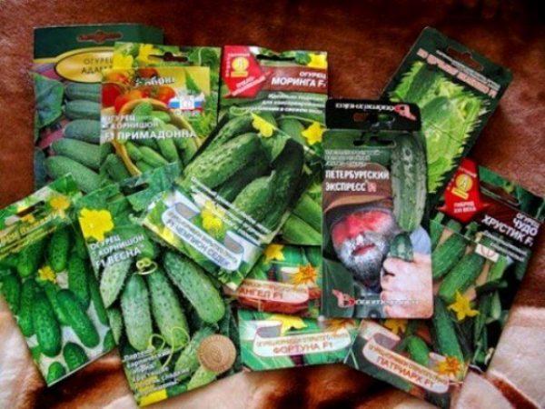 cucumber2-1