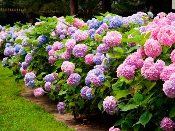 flowers7-1