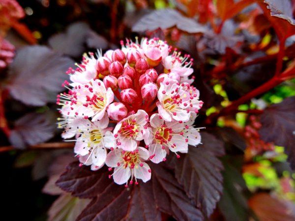 flowers8-1