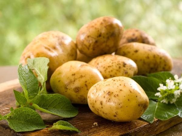 potato-1