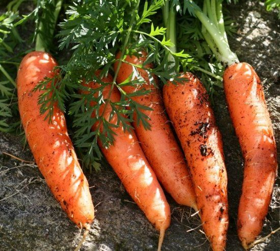 carrot85