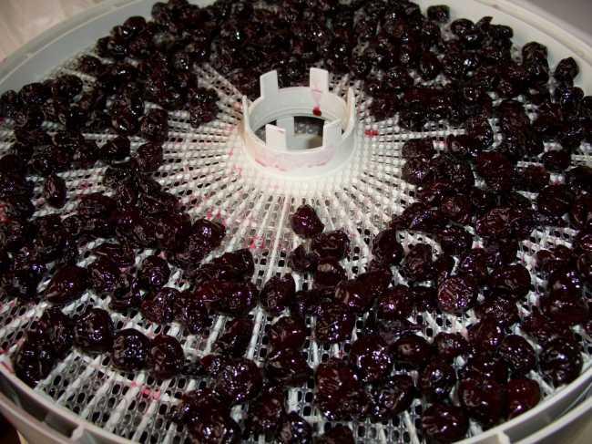 cherry6-1
