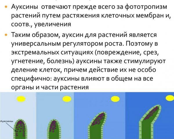 regulyator_rosta3