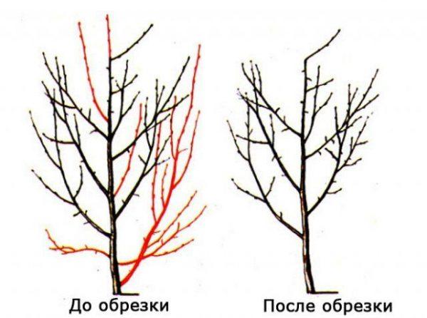 Garden_design6