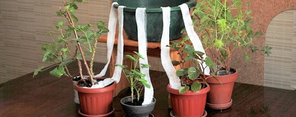 house_plants2