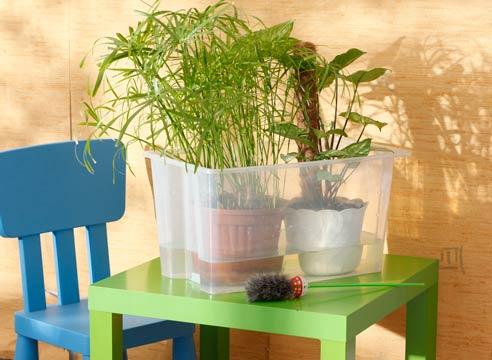 house_plants3