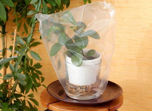 house_plants6