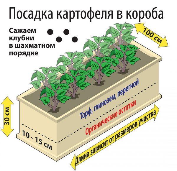 kak_gluboko_sazhaty_kartofely6